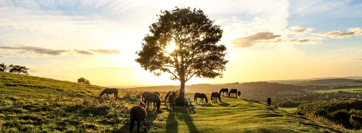 Photo Pony Heaven par Joe James